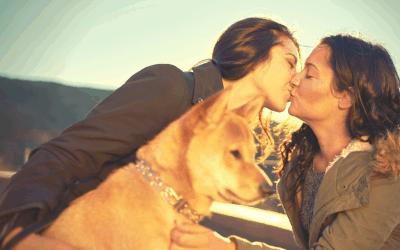 Lesbians Dogs and Divorces